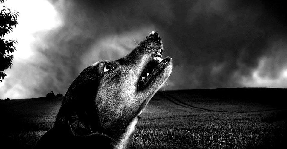 Ухапване от бездомно куче