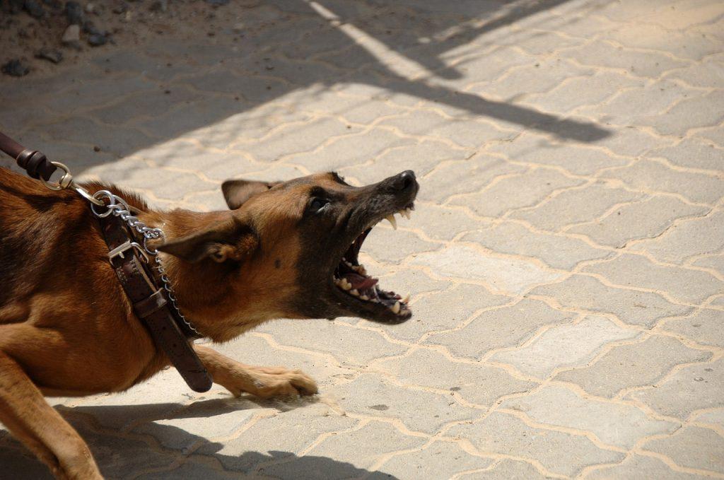 инциденти с животни